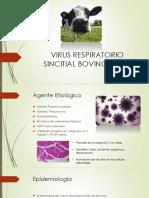 Virus Respiratorio Sincitial Bovino (VRSB)