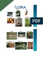 Flora y Fauna Selva