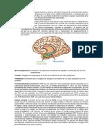 Glosario Neurología