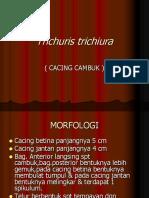 TRICHURIS TRICHIURA.ppt