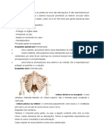 Ossos Do Corpo Humano Se Juntam Por Meio Das Articulações