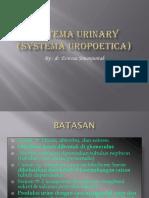 Systema Urinary