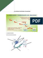 Guía de Actividades Neuronas Neurofisiologia - Neuropatologia (2)