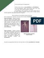 monotiledona.pdf