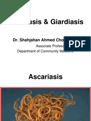 Akut fázis ascariasis, Hogyan visszakerülhet az ascaris gyógyszer?