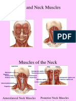 6.24 Muscles Head & Neck  - Blok 6
