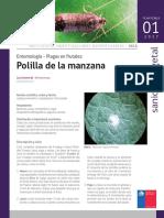 Polilla Manzana