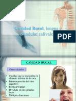 cavidadbucal-130428184421-phpapp02