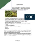 256787612 Criptogamas PDF