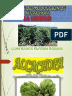 costos de produccion -alcachofa