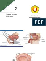 Fisiologi Genitourinary System