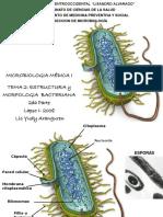 estructura y morfologia bac.ppt