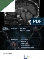 Seminario básico de neurología