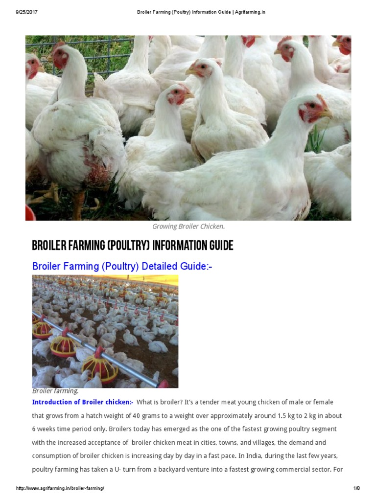 Broiler Farming (Poultry) Detailed Guide: