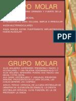 Grupo Molar Modificad