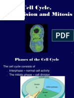 2014 Cell Devision