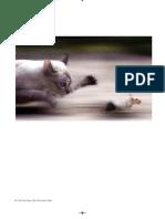 El Gato, El Ratón JAPPE