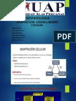 Mecanismos de Adaptación Celular (2)