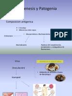 Patogenesis y Patogenia