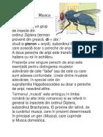 Insect e
