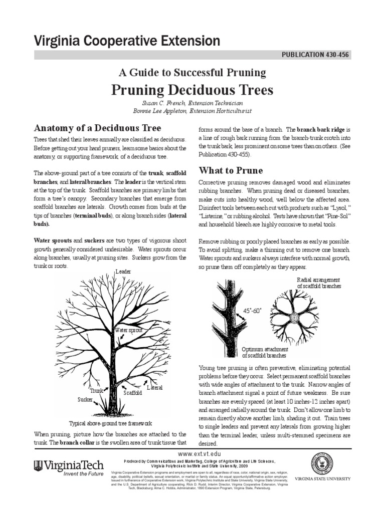 A Guide to Successful Pruning_430-456_pdf | Pruning | Trees