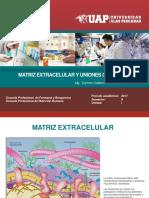 BCM 2017-2 Teoria 6.pdf