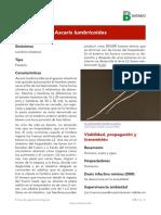 Ascaris lumbricoides ART.pdf