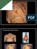 Anatomia Del Tórax