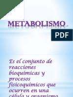 METABOLISMO DIAPOSITIVAS..pptx