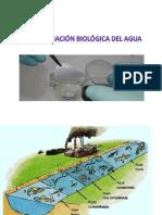Bacterias y Coliformes
