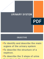 11.1 Nephron and Urine Formation Ppt