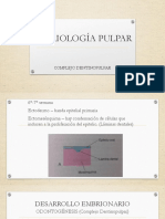 02 Conformación Histologica Del Endodonto
