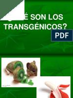 transgenico-1219640109902925-8