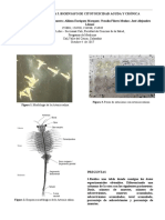 Práctica 3 -PDF