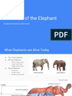 evolution of the elephant