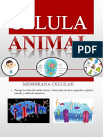 BIOQUIMICA Celula Animal