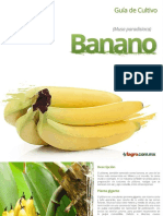 Guía de Cultivo del Banano - Fagro