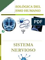 anatomia basica cerebro