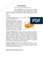 MITOCONDRIAS resumen