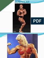 Muscular 2 (1)