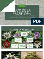 Flor de La Passiflora Brayan y Anyi