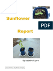 sunflower report