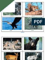 Forest Animal Flashcards