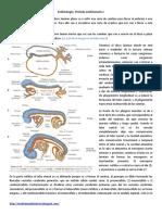 Embriolog..Clase 6 Periodo Embrionario