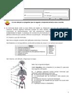 CN Sistema Nervoso e Circulatório 9 Ano