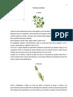 37 plantas medicinais