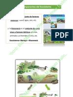 2. Ecologia Continuacion Conceptos-watermark