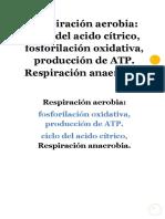 RESPIRACION_AEROBIA_Y_ANAEROBIA.pdf