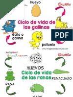 Ciclos Vitales Para Niños PDF (1)