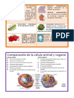 Funciones de Los Organelos Citoplasmáticos